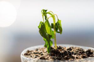 اي الحالات التالية قد تكون السبب في ذبول النبات