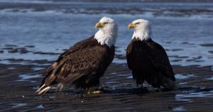 قارن بين طريقة حدوث التنفس في الثدييات وفي الطيور
